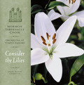 4537795_consider_the_lilies