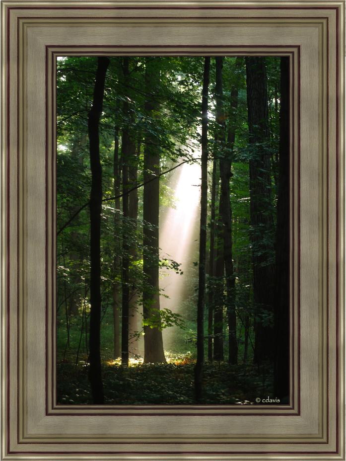 5172210 sacred grove